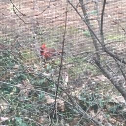 cardinalfriend