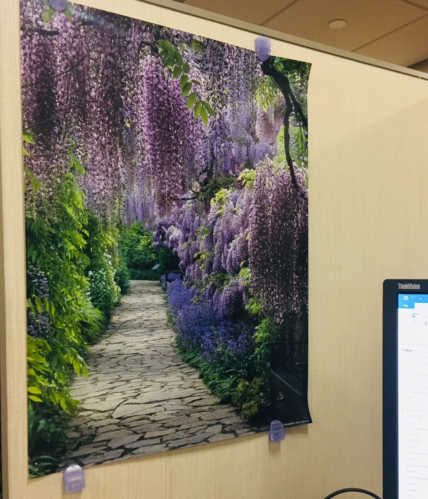 wisteriaposter